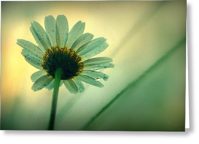 Beauty Beneath.. Greeting Card by Al  Swasey