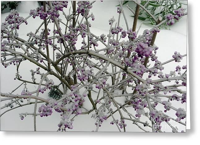 Beauty Berry Winter Greeting Card by Marlene Rose Besso