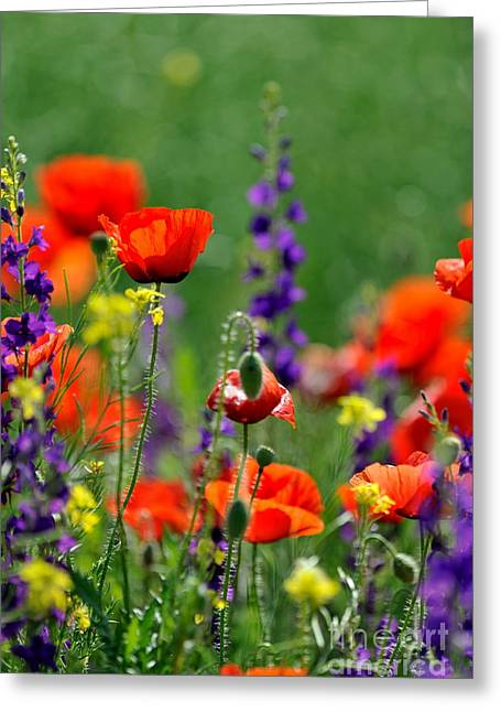 Beauty Colorful Flowers Greeting Card by Boon Mee