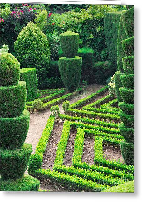 Beauty Decorative Green Park Greeting Card by Boon Mee