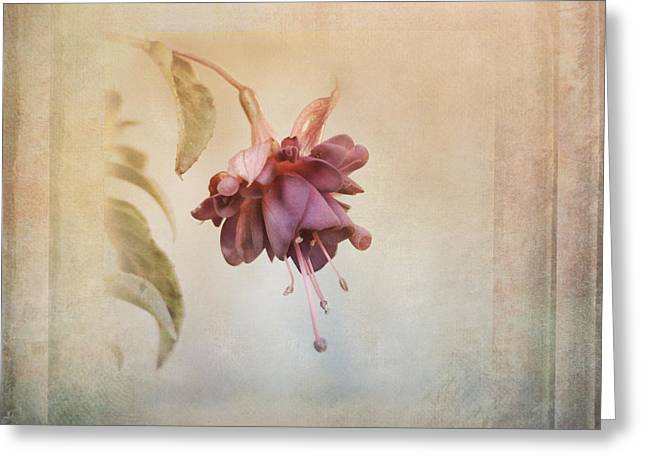 Beauty Fades Softly Framed Greeting Card