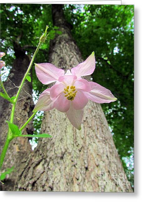 Beauty From Below Greeting Card