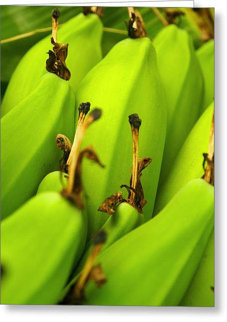 Beauty In Bannanas Greeting Card by Justin Woodhouse