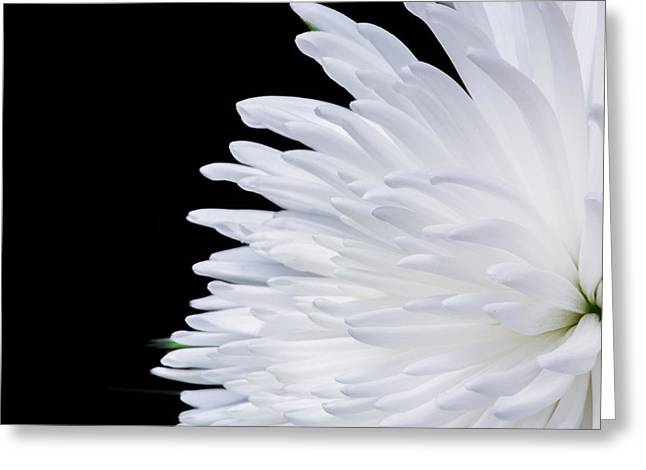 Beauty In Contrast Greeting Card