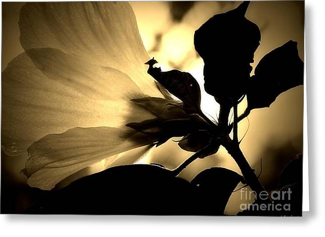 Beauty In Sepia Greeting Card by Christy Ricafrente
