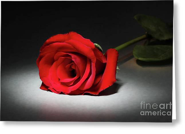 Beauty In The Spotlight Greeting Card