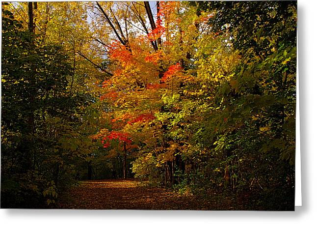 Beauty In The Woods Greeting Card by Jocelyne Choquette