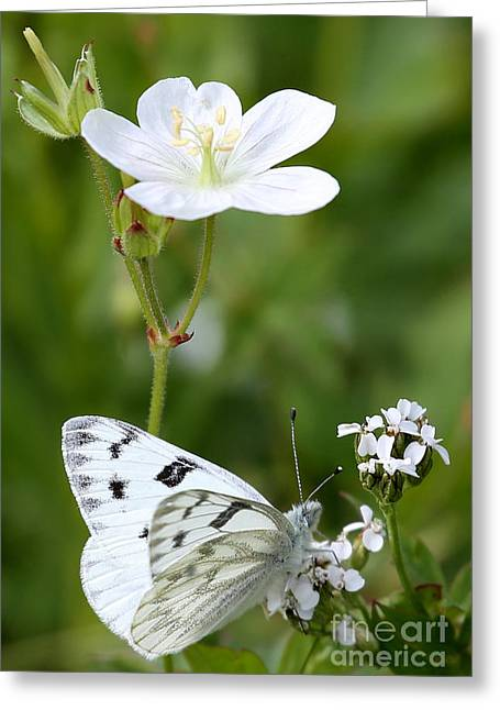 Beauty In White Greeting Card by Marty Fancy