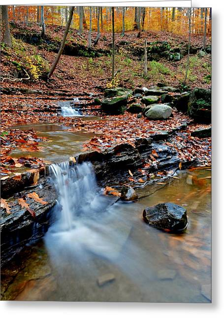 Beauty Is In The Eye Of The Beholder Greeting Card by Frozen in Time Fine Art Photography