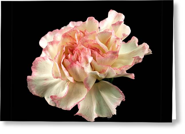 Greeting Card featuring the photograph Beauty by Liz  Alderdice