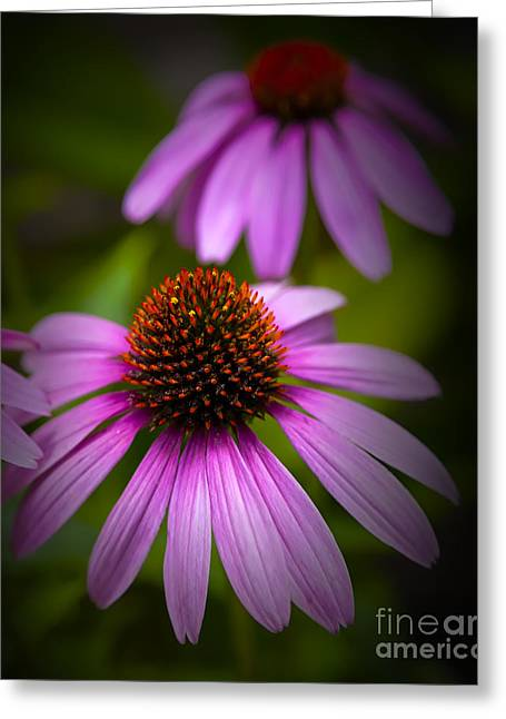 Greeting Card featuring the photograph Beauty Of Life by David Millenheft