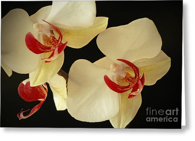 Beauty Of Orchids Greeting Card