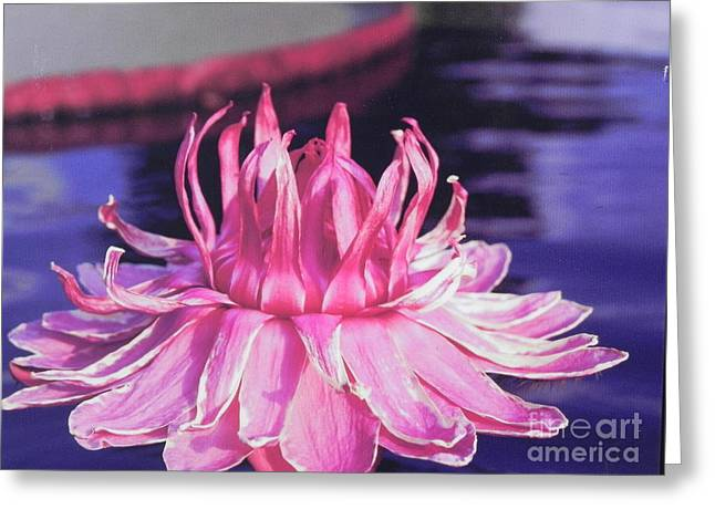 Greeting Card featuring the photograph Beauty Of Pink At The Ny Botanical Gardens by Chrisann Ellis
