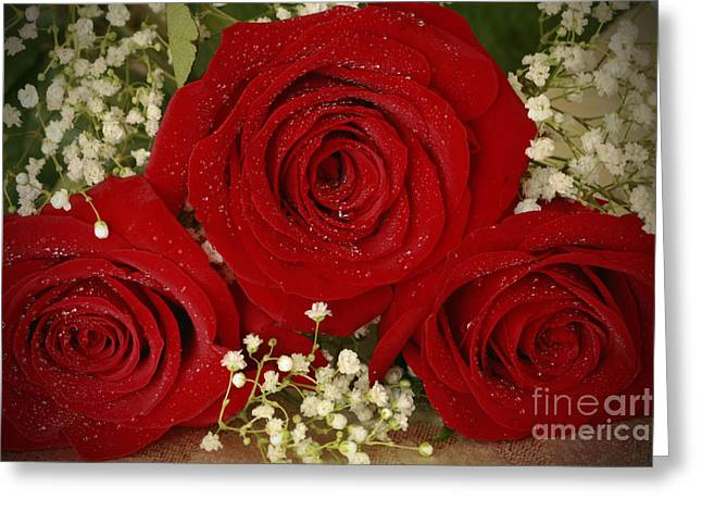 Beauty Of Roses Greeting Card by Inspired Nature Photography Fine Art Photography