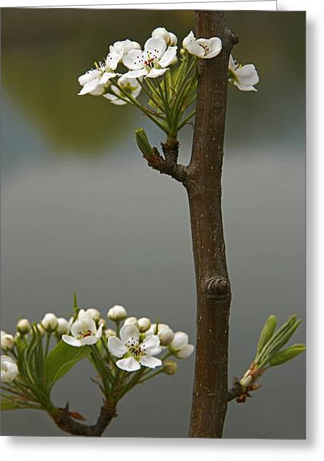 Beauty On A Stick Greeting Card by Qing