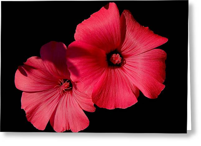 Beauty On The Black #1 Greeting Card