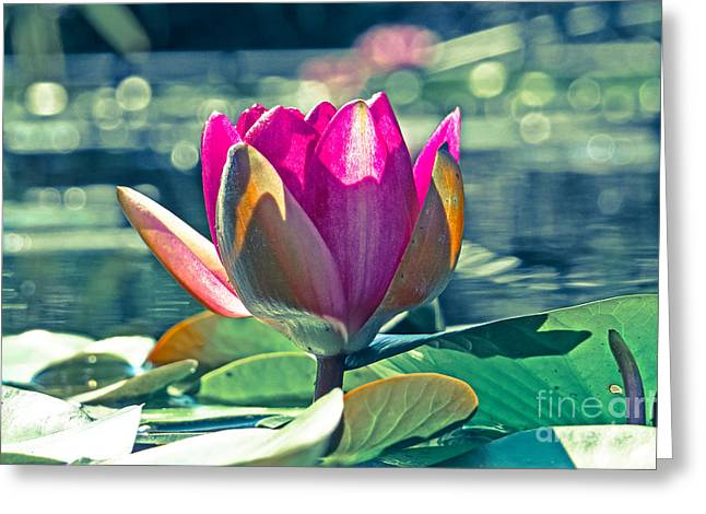 Beauty On The Water Greeting Card by Dawn Gari