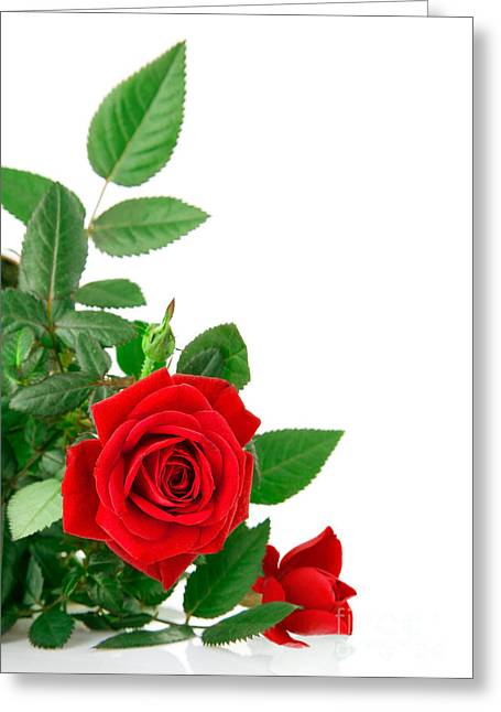 Beauty Red Roses Greeting Card by Boon Mee