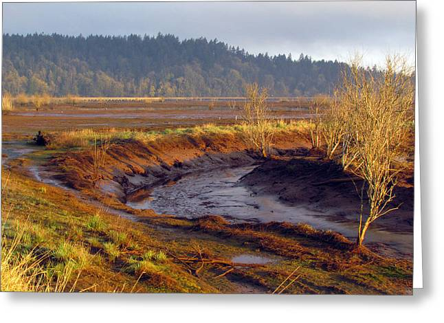 Greeting Card featuring the photograph Beauty Revealed At Low Tide by I'ina Van Lawick