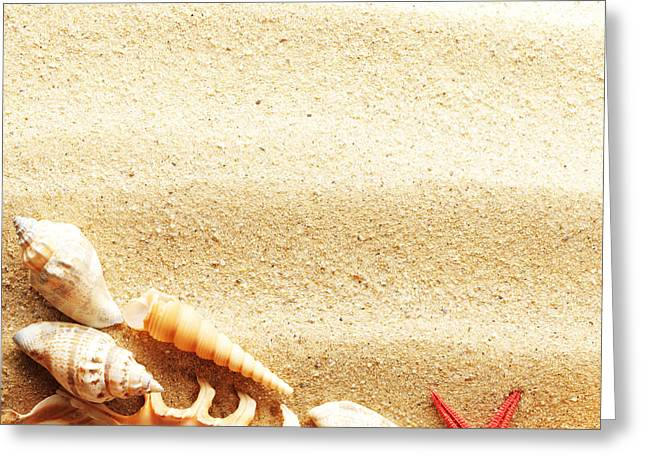 Beauty Sea Shell Greeting Card by Boon Mee