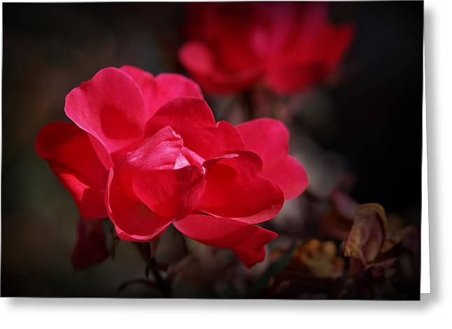 Beauty Unfolds Greeting Card