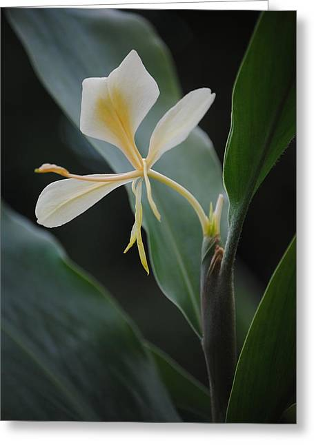 Beauty Unknown Greeting Card
