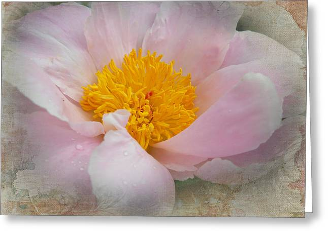 Beauty Woven In Greeting Card by Judy Hall-Folde