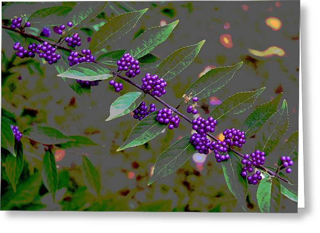Beautyberry Greeting Card by Frank Tozier