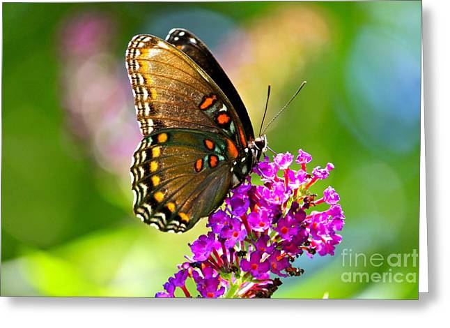 Beautyfly Greeting Card by Jay Nodianos