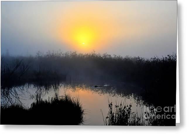 Beaver At Beaver Dam In Morning Greeting Card by Dan Friend