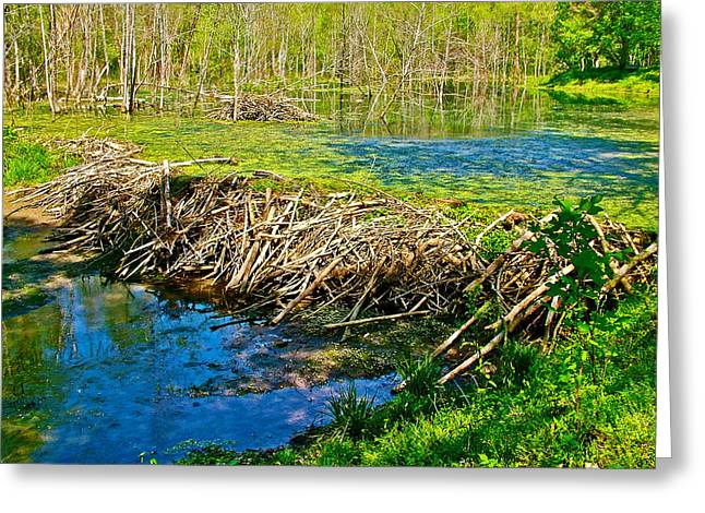 Beaver Lodge And Dam On Colbert Creek Along Rock Spring Trail In Natchez Trace Parkway-alabama Greeting Card by Ruth Hager