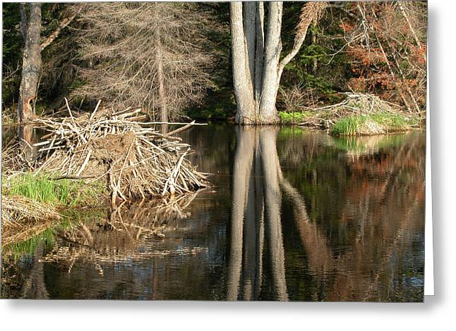 Beaver Lodge On Beaver Pond Greeting Card by Rob Huntley