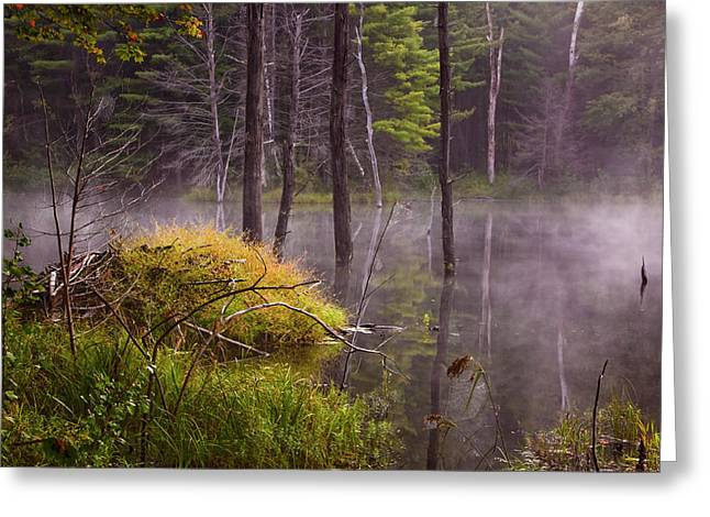 Greeting Card featuring the photograph Beaver Lodge by Tom Singleton