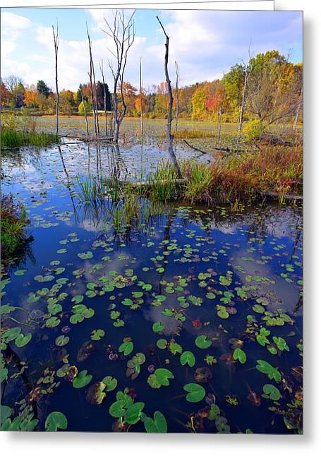 Beaver Marsh In Autumn Greeting Card