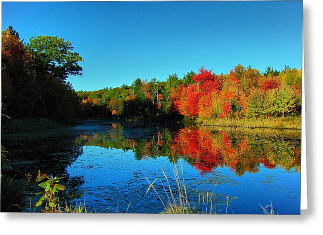 Beaver Pond Foliage Greeting Card