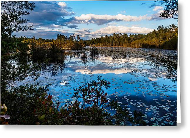 Greeting Card featuring the photograph Beaver Pond - Pine Lands Nj by Louis Dallara