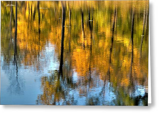 Beaver Pond Reflections 2 Greeting Card by Rob Huntley
