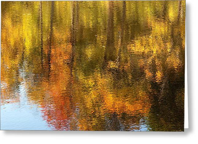 Beaver Pond Reflections Greeting Card by Rob Huntley