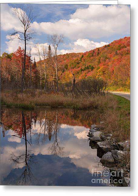 Beaver Pond Symmetry Greeting Card