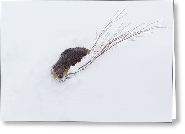 Beaver, Winter Food Greeting Card
