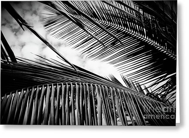 Maui Paradise Palms Hawaii Monochrome Greeting Card