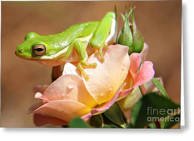Bed Of Roses Greeting Card by Leslie Kirk