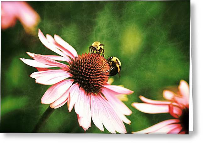Bee 4 Greeting Card