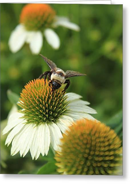 Bee 7 Greeting Card by Reid Callaway