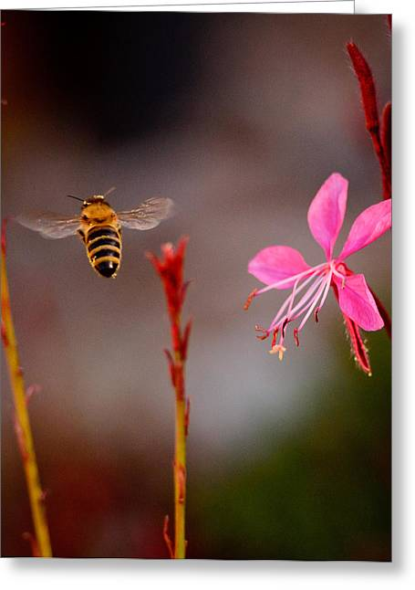 Greeting Card featuring the photograph Bee And Flower by Janis Knight