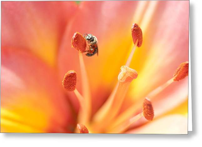 Bee And Lily Greeting Card
