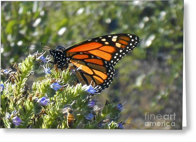 Bee And Monarch  Greeting Card
