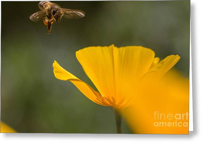 Bee And Poppy 2 Greeting Card