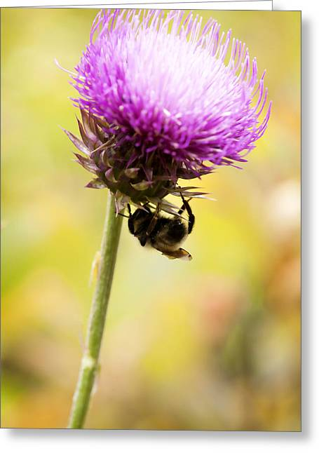 Bee And Thistle Greeting Card by Marilyn Hunt