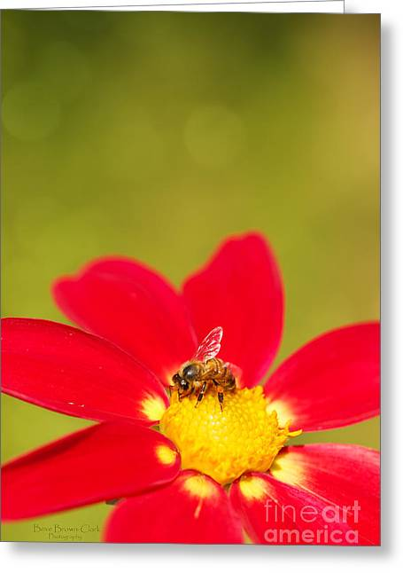 Bee-autiful Greeting Card by Beve Brown-Clark Photography
